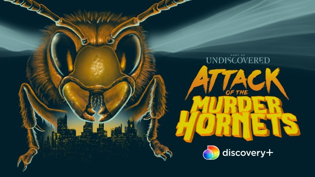 [Interview] Michael Paul Stephenson for ATTACK OF THE MURDER HORNETS