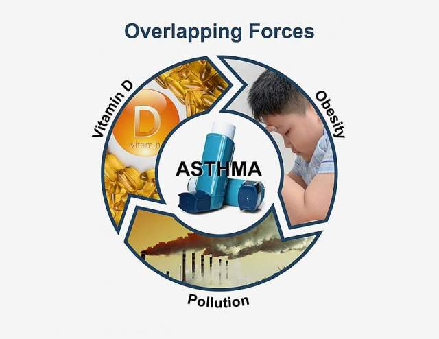 Graphic of the interaction of vitamin D, obesity, and air pollution on asthma