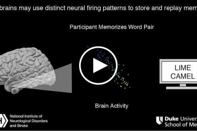 In a study of epilepsy patients, researchers at the National Institutes of Health monitored the electrical activity of thousands of individual brain cells, called neurons, as patients took memory tests. Just as musical notes are recorded as grooves on a record, they found that our brains may store memories in the firing patterns of neurons. Fractions of a second before a patient successfully recalled a word pair, neurons in their brains fired in a sequence that was like what the researchers saw when the patient learned the pair. (This video has no audio).