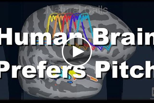 Our brains appear uniquely tuned for musical pitch
