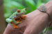 Frog on the Hand