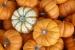CO3~2~Novice~Fran~Raab~Pumpkins~59