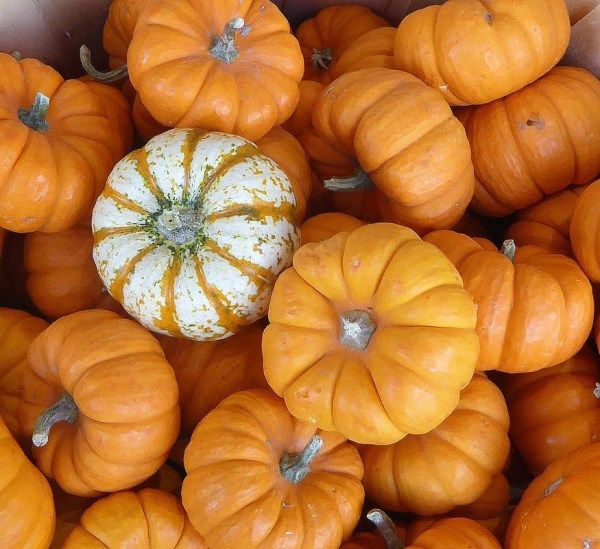 'Pumpkins' by Fran Raab. Novice, Digital. 2nd Place.