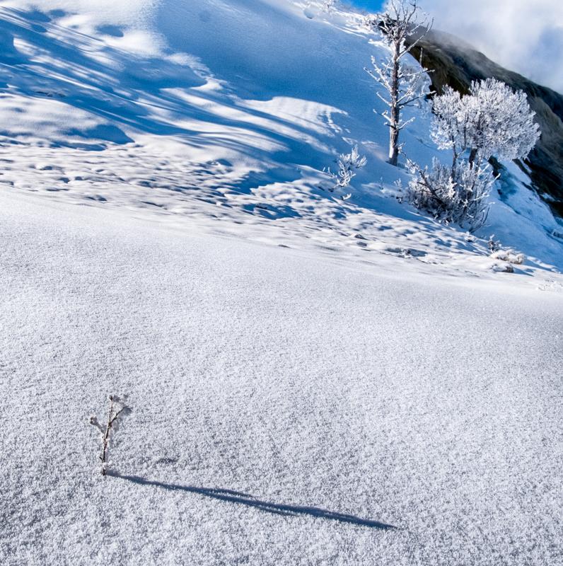 CO6~2~Advanced~John~Norvell~Little_Tree_In_Snow~39