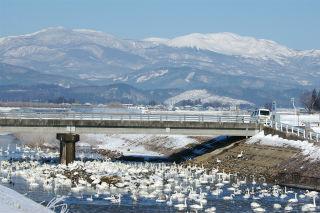 水原川白鳥飛来地の写真