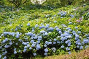 美花園の写真1