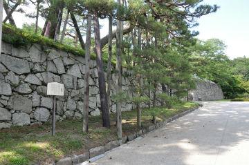 二本松城跡箕輪門のアカマツの写真