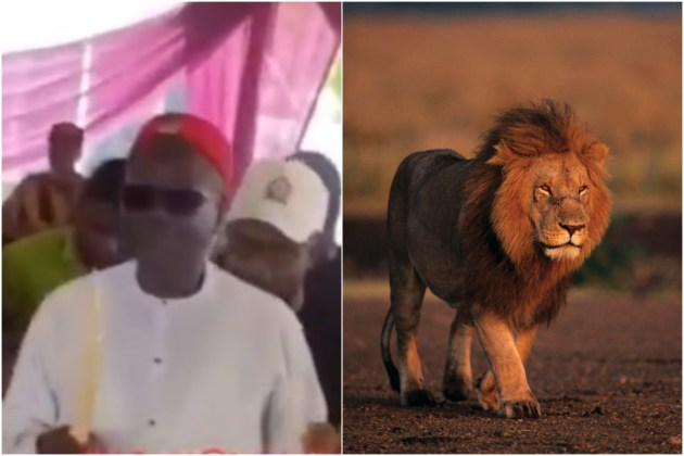 Businessman storms his father's funeral with a lion and startles everyone (Video)