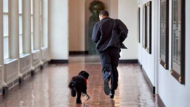 Photo of Barack Obama mourns the death of his dog