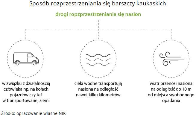 Sposób rozprzestrzeniania się barszczy kaukaskich. Źródło: opracowanie własne NIK