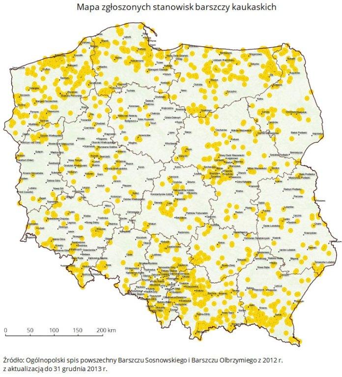 Mapa zgłoszonych stanowisk barszczy kaukaskich. Źródło: Ogólnopolski spis powszechny Barszczu Sosnowskiego i Barszczu Olbrzymiego z 2012 r. z aktualizacją do 31 grudnia 2013 r.