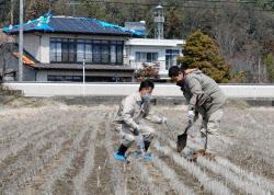 放射性物質の有無を確認するため、田んぼで土壌を採取する県職員(3月31日、福島県桑折町)