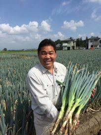 日本一広大な長葱の耕地