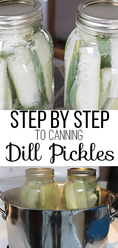 Step by Step guide to canning dill pickles  - Nikki's Plate