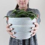 How To Keep Your Indoor Plants Alive