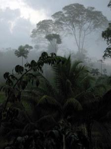 Dschungel in Costa Rica, Nähe Boca Tapada, Laguna del Lagarto Lodge. Foto: www.nikkiundmichi.de