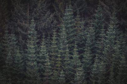 fichten-eifel-hohes-venn-landscahftsfotografie