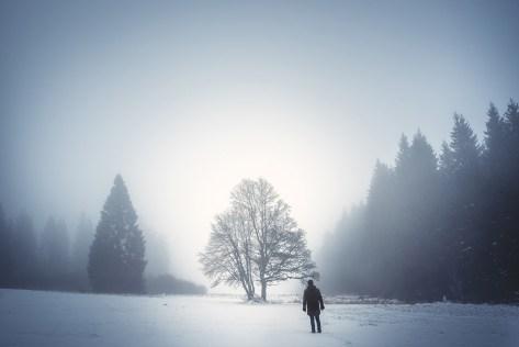 hautes-fagnes-tree-landscape-photography