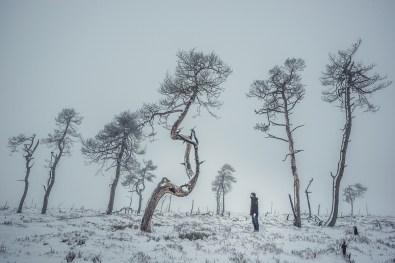 noir-flohay-hautes-fagnes-hohes-venn-fotografie