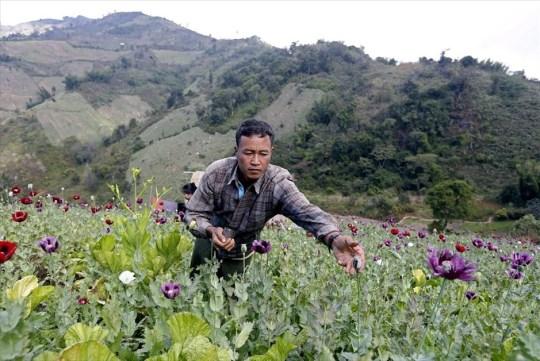 paragogi-opiou-sti-mianmar