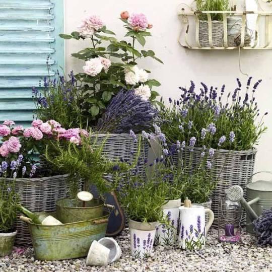 Φυτά που διώχνουν τα κουνούπια, ΚΑΛΟΚΑΙΡΙ, ΦΥΤΑ, sUMMER, MOSQITOS, ΚΟΥΝΟΥΠΙΑ, ΤΟ BLOG ΤΟΥ ΝΙΚΟΥ ΜΟΥΡΑΤΙΔΗ, nikosonline.gr,