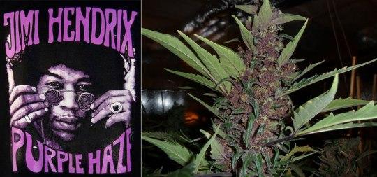 Τζίμι Χέντριξ, «Purple Haze».