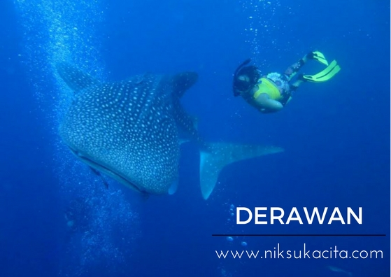 aku dan Whale Shark - Derawan.