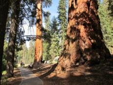 Big Trees Trail