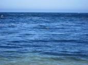 Seehunde vor Pacific Grove