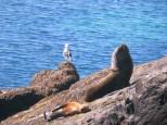 Seelöwen-Siesta