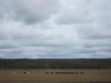 """Stilleben """"Pferde in Landschaft"""""""
