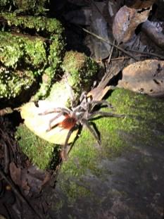 ... und nicht so harmlose Spinnen.