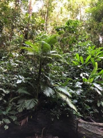 schon wieder Dschungel