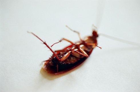 La Cucaracha - Venice, CA