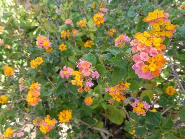 Flowers, Napali Coast, Kauai, USA