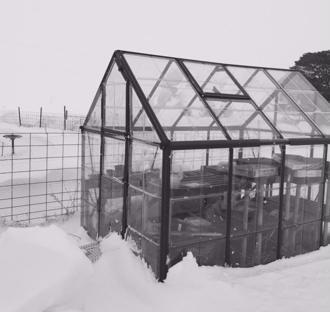 Green house in the winter