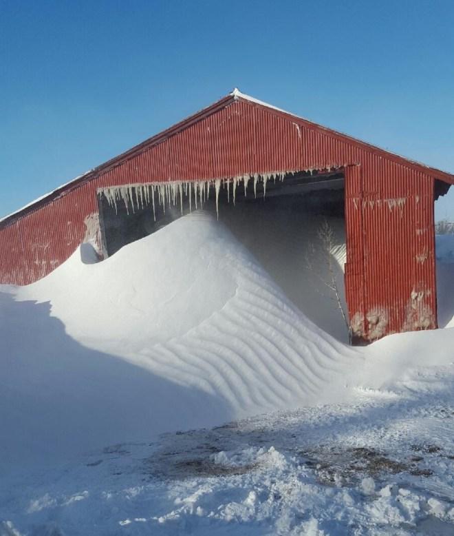 Snow blown into the barn