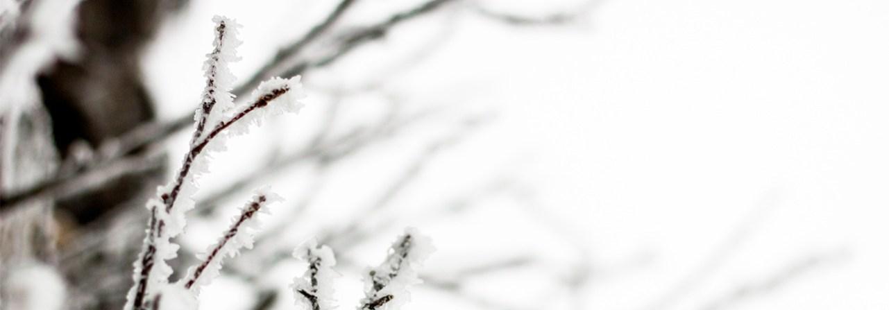Nina Marquardsen Sverige 2015 Fotografi