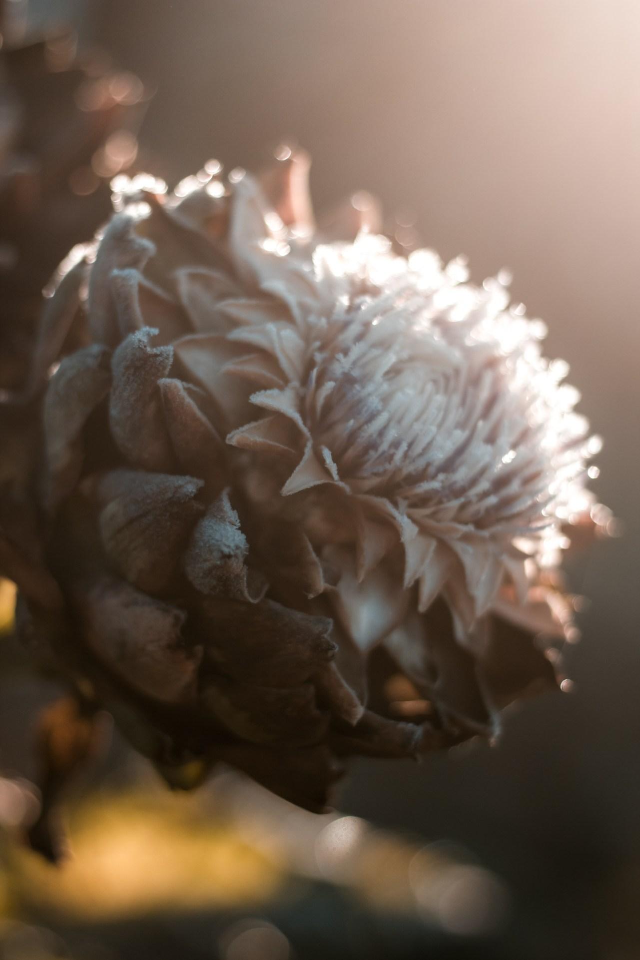 Nina Marquardsen Rimfrost fotografi
