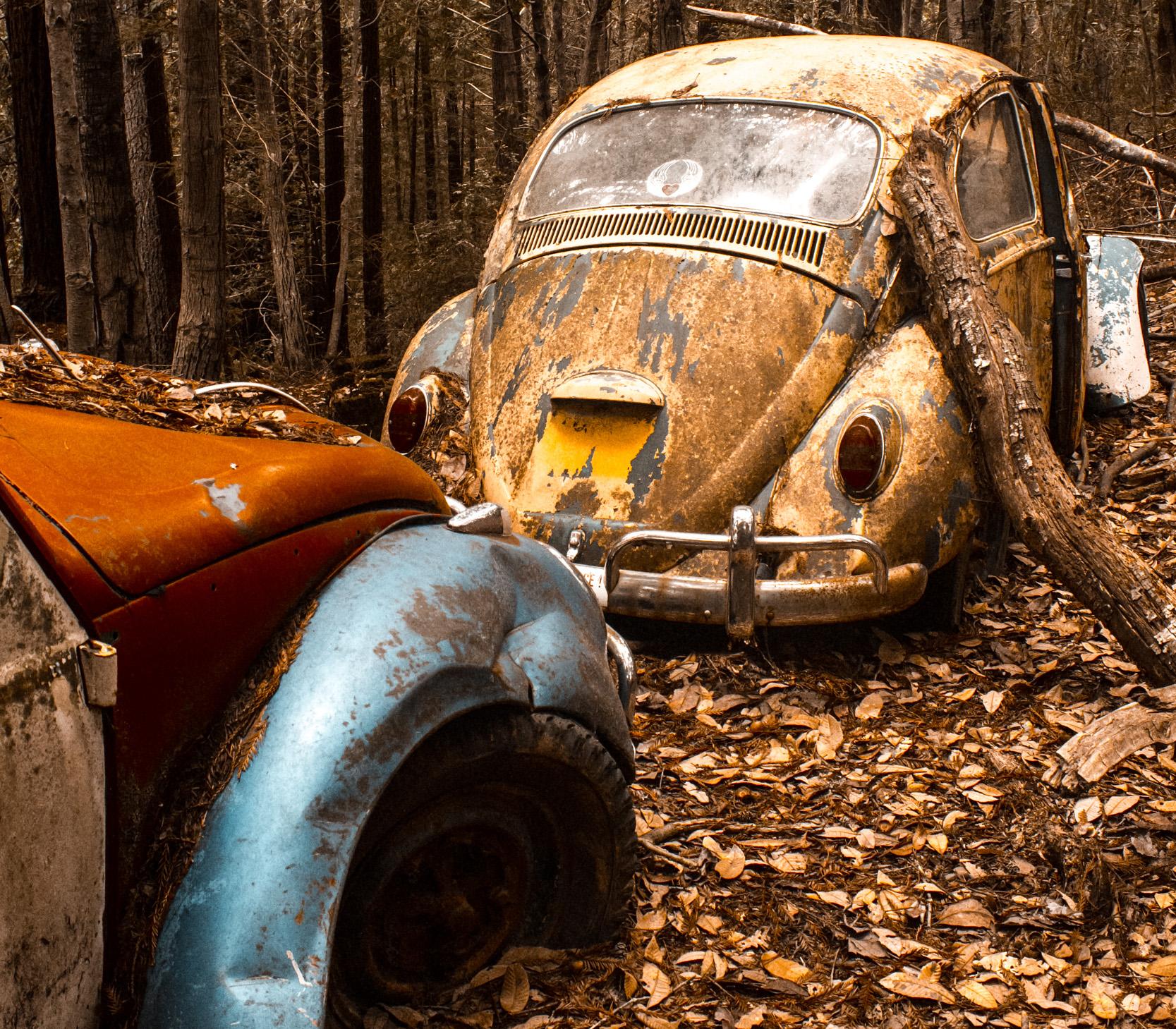 Beetle Graveyard – nyt edit