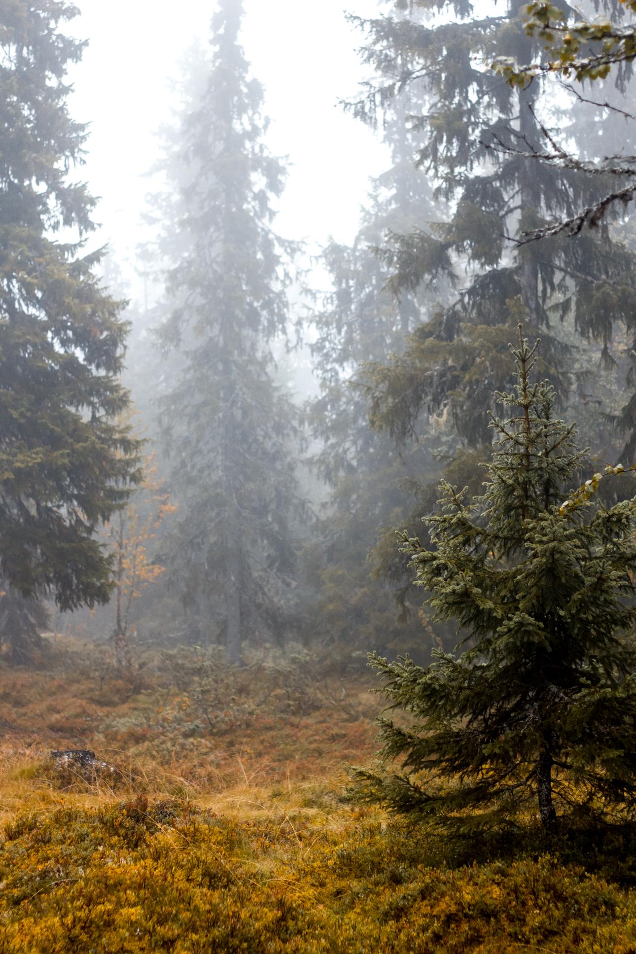 Sverige i efterårsfarver