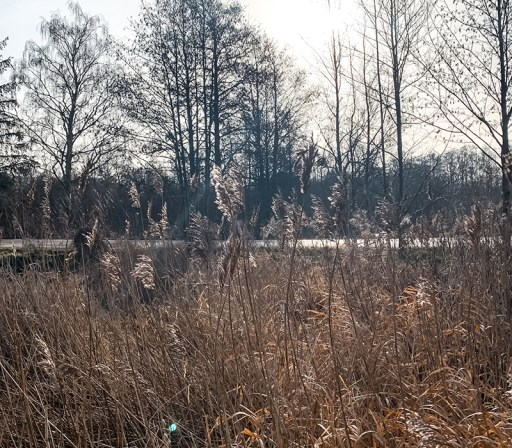Vinterbilleder - Gurre