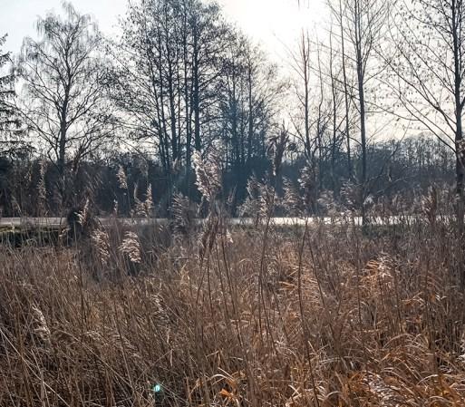Vinterbilleder fra området