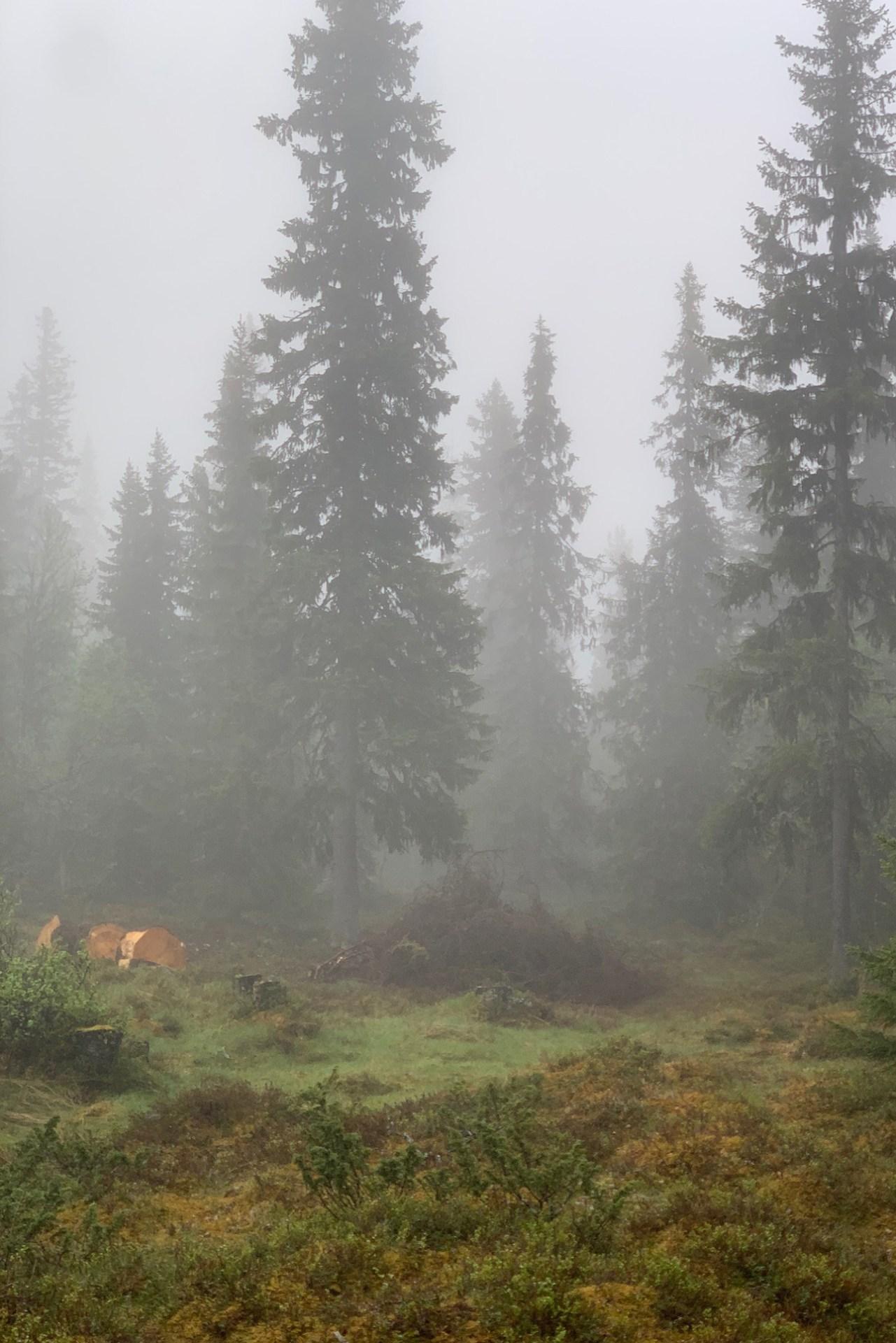 Nina Marquardsen Morgendis i skoven