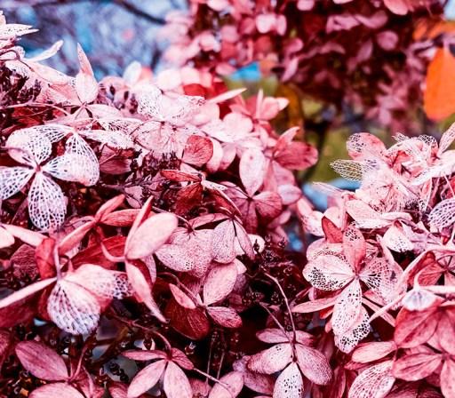 Nina Marquardsen - siden sidst og lyserøde blomster