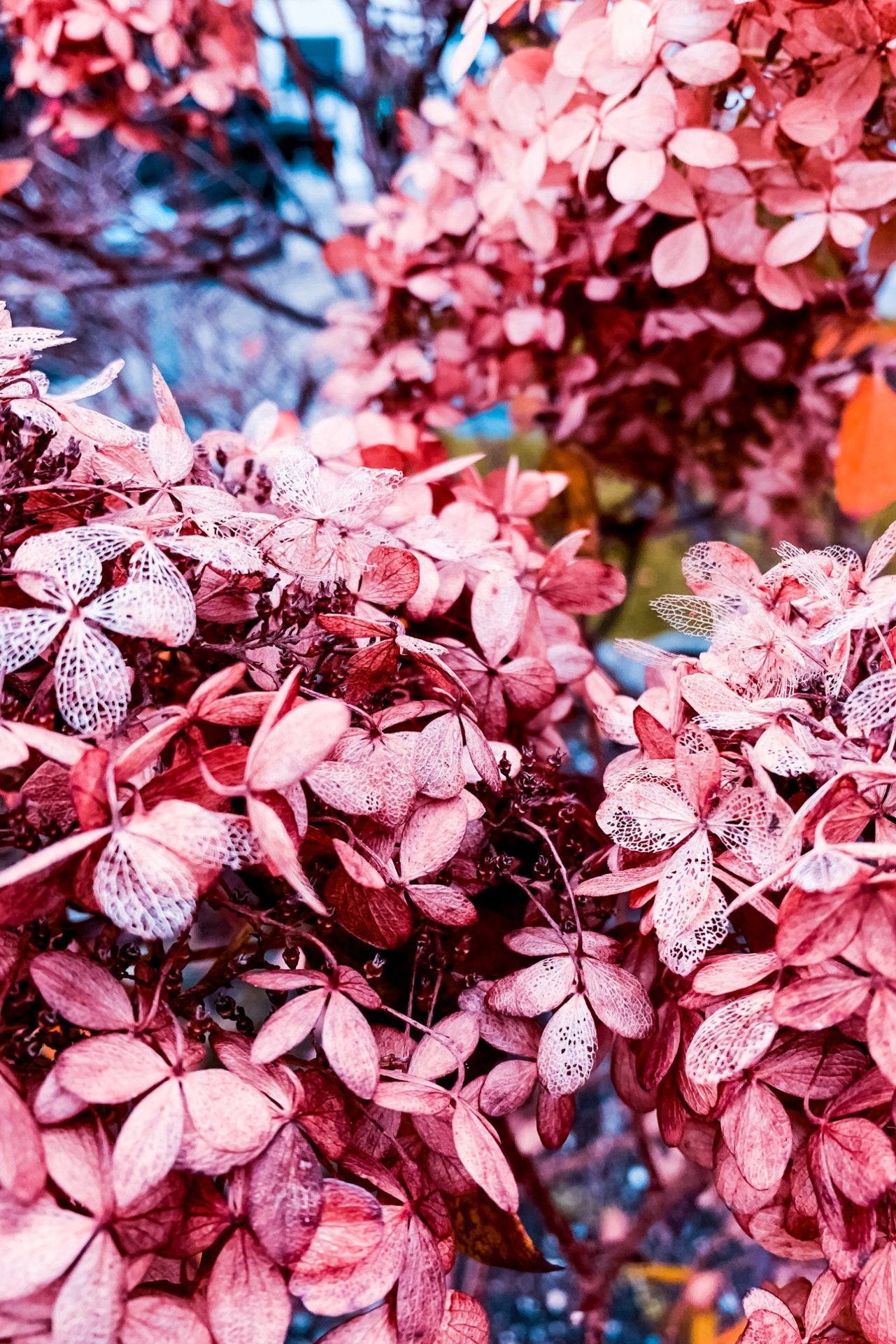 Nina Marquardsen - siden sidst - lyserøde blomster