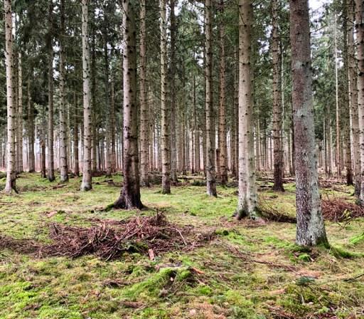 Hornbæk skov