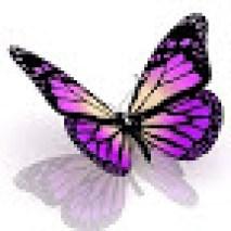 NineFrogs Butterfly