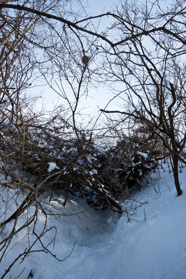 Bramble up East Draw in the Snow