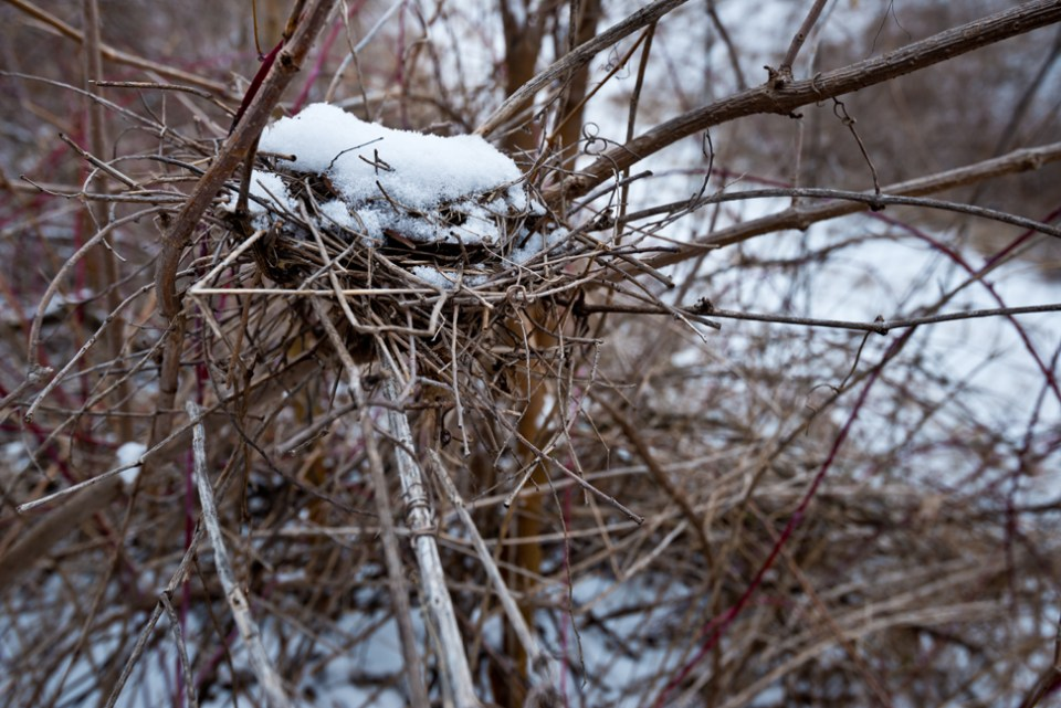 Nest with Snow